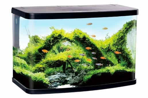 Aquarium Komplett - abgerundet - mit LED Abdeckung und Eck-Filter